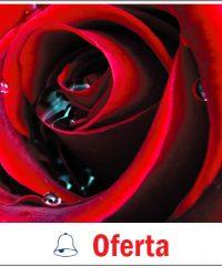 Krystyna's Flowers